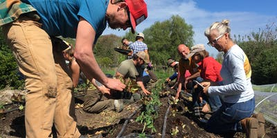 Learn to Farm - The Singing Frogs Farm Way! Spring 2019