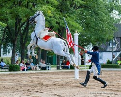 The Tempel Lipizzans: Matinee Performance