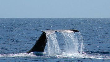 Oceanside Whale and Dolphin Tours