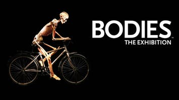 """Bodies: The Exhibition"""