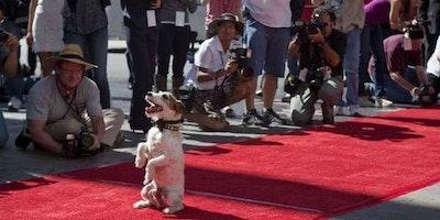 Milano Dog Fashion Show & Party
