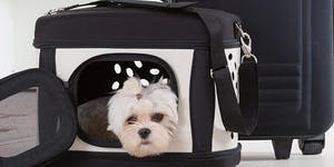 Pet Academy: abituiamoci a tutto