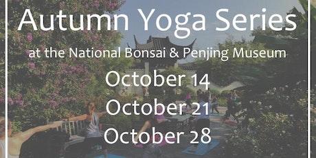 Autumn Yoga Series At The National Bonsai Penjing Museum US - Us national arboretum google maps