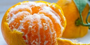 Cold Tolerant Citrus Production for the Southeastern Co...