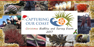 Capturing our Coast Christmas BioBlitz & Survey Event - Mount Edgcumbe