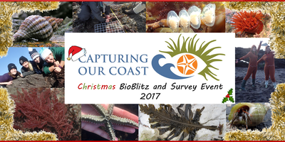 Capturing our Coast Christmas BioBlitz & Survey Event - Plymouth