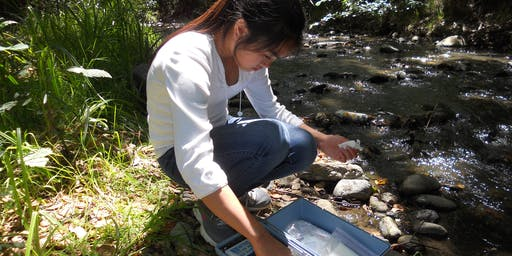 Stevens Creek Water Quality Monitoring