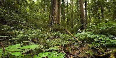 Redwoods Friday Nov 24, 2017: Samuel P. Taylor State Park