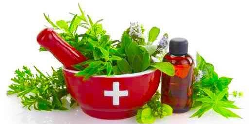 Plant Based Medicine for Winter Wellness