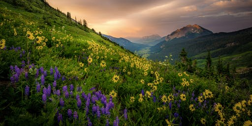 2019 Crested Butte Wildflowers Photography Workshop