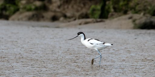 RSPB Through the seasons- a guided tour of Havergate Island