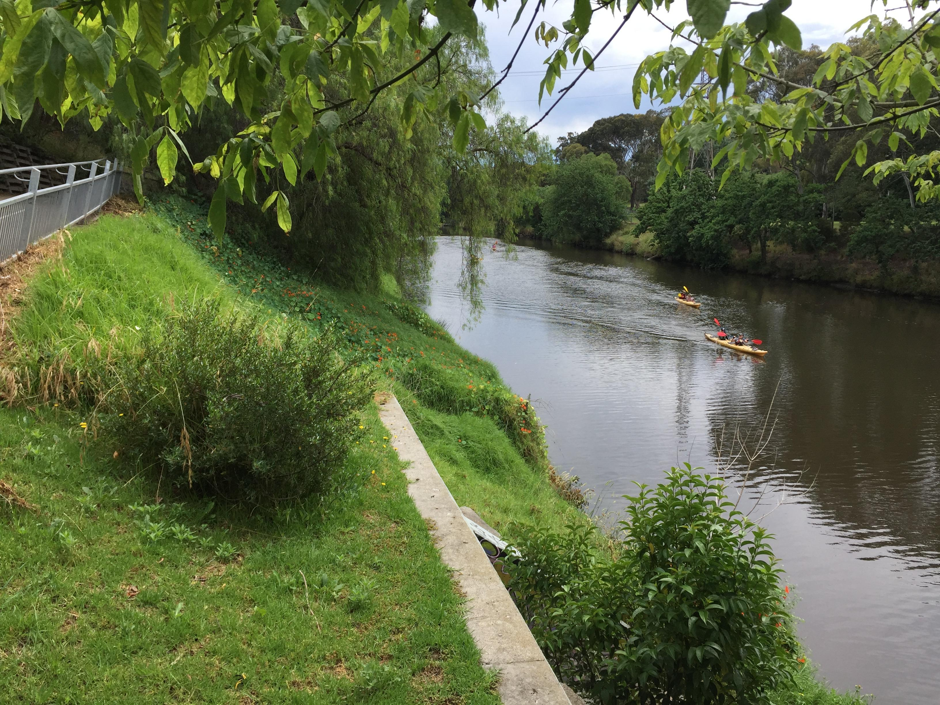 The Yarra and Climate Resilience: Safeguardin