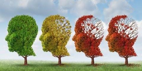 Great Tips for Alzheimer's Prevention