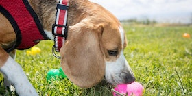 Wag Hotels' 9th Annual Easter Egg Hunt for Dogs- Sacramento tickets