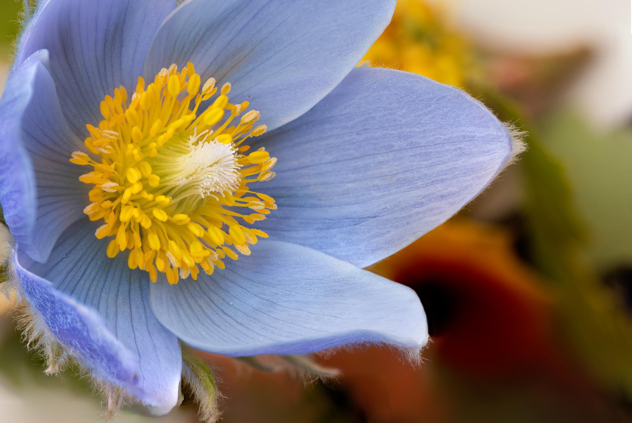 Wildflower Photography Workshop