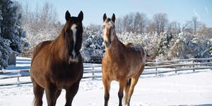 2018 Winter Erin Equine Education Workshops (All 3...