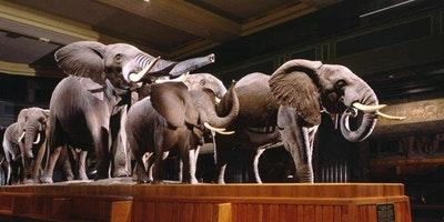 Kids Russian Tour for 5-8 years old at the AMNH(African Wildlife)