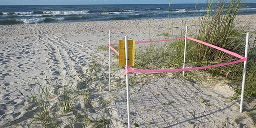 Sea Turtle Adopt-a-Nest