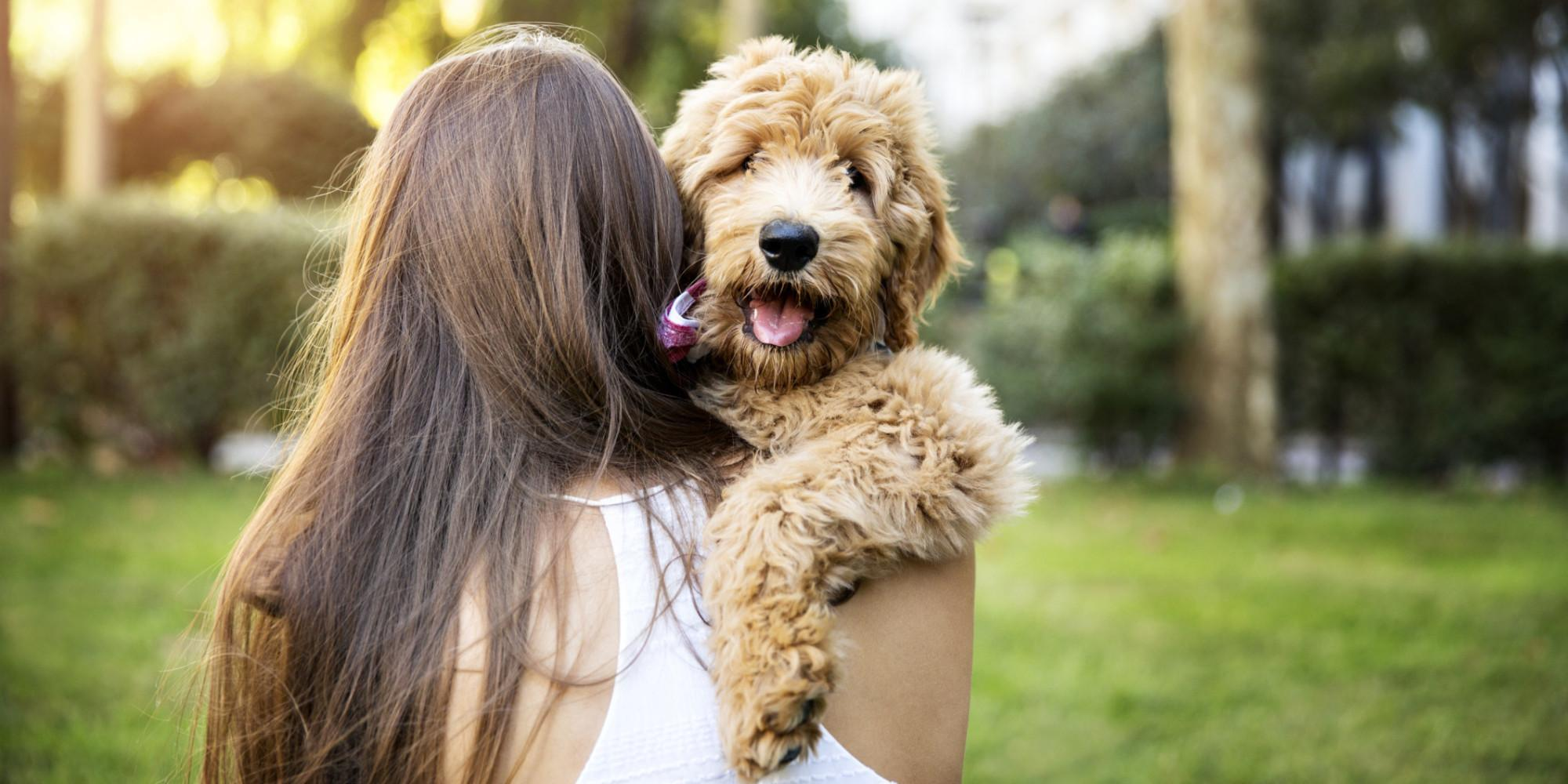 PUPPY MANNERS (LEVEL 1) Sunday Marlay Park