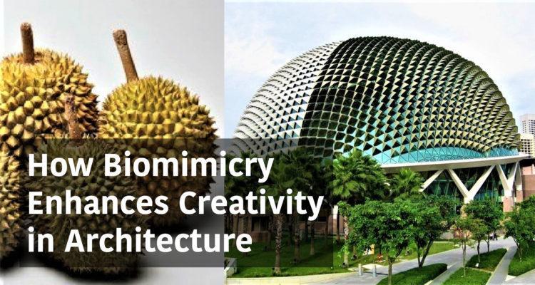 Biomimicry in Architectuur