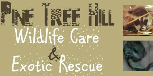 Volunteer Training / Wildlife Basics