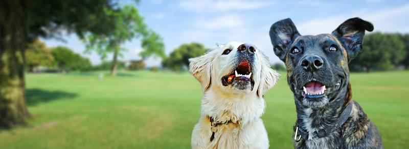 GOOD DOG (LEVEL 1) Saturday, Bushy Park