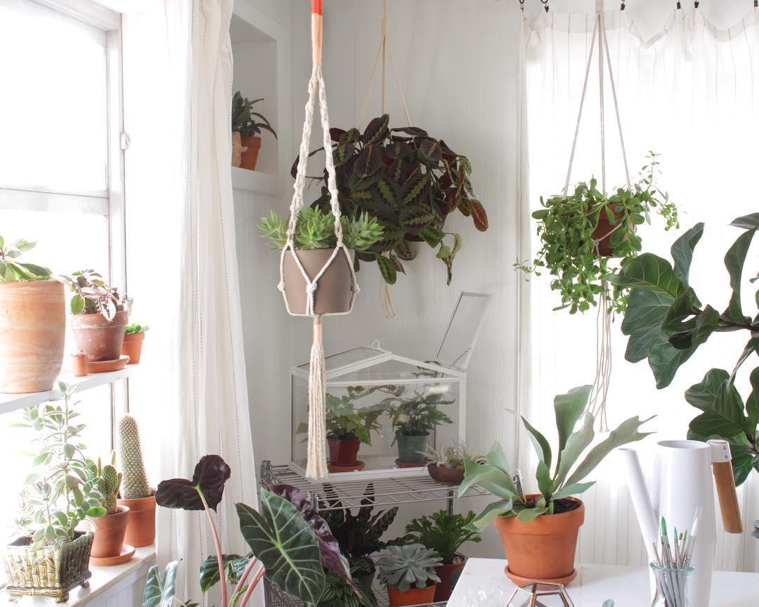 Plant Hanger Macrame Workshop - Casa Tropisou
