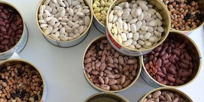 Biodiversità degli ortaggi: dagli antichi sapori ai moderni segreti della salute