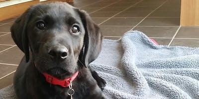 Puppy Life Skills Stage 1