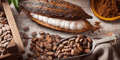 The Art of Making Chocolate- Zokoko