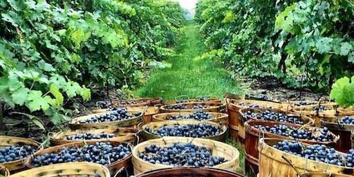 Vineyard & Wine