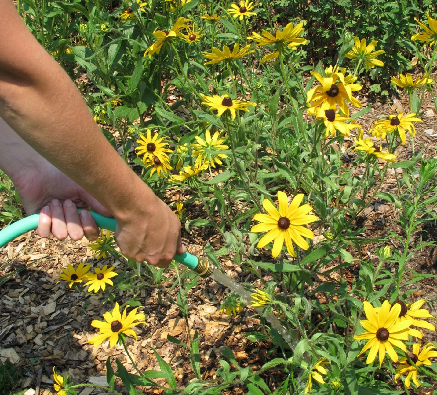 Naturescaping: Native Plants for Beauty, Colo