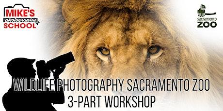 Wildlife Photography Sacramento Zoo- 3-Part Workshop tickets