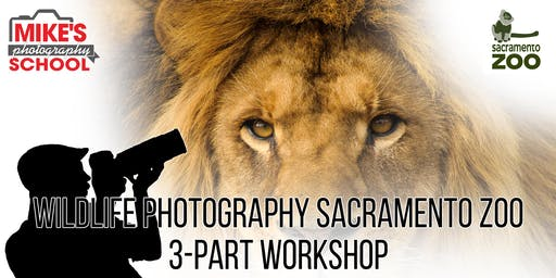 Wildlife Photography Sacramento Zoo- 3-Part Workshop