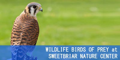 WILDLIFE BIRDS OF PREY at SWEETBRIAR NATURE CENTER
