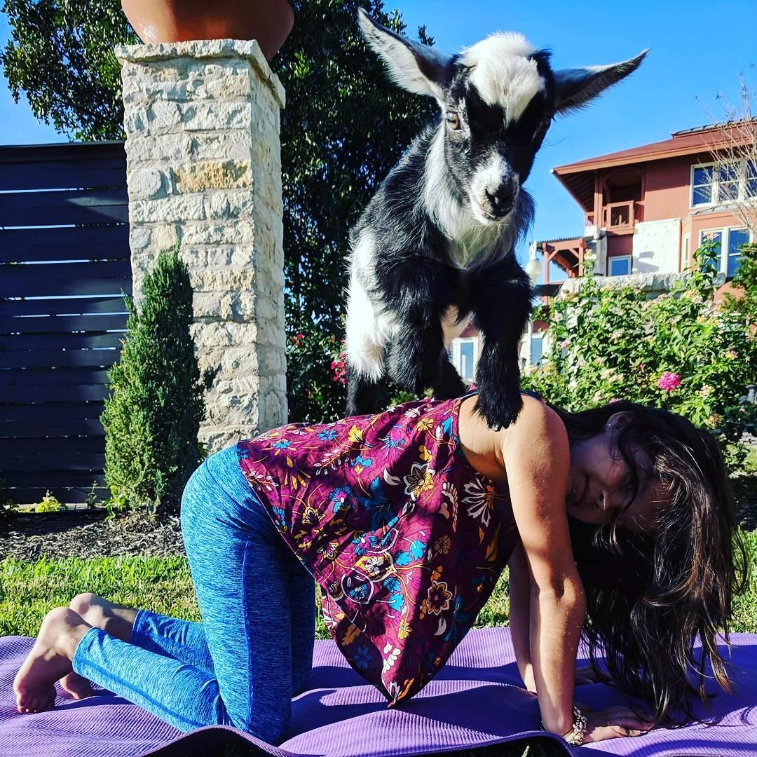 ATX Goat Yoga Happy Hour Event Overlooking La