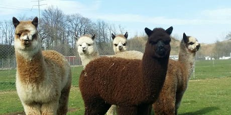 Alpaca Yoga is back!!   tickets