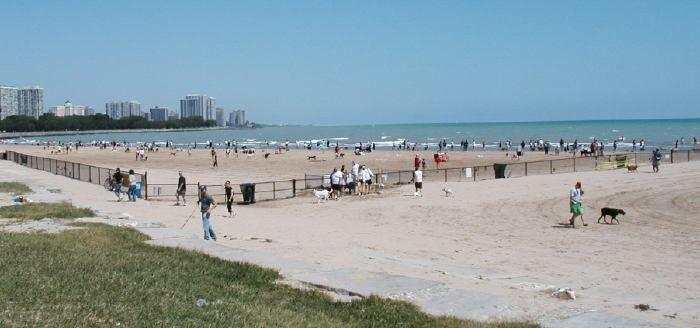 Montrose Dog Beach Earth Day Clean Up