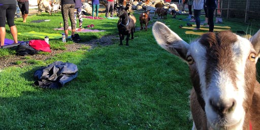 Goat Yoga Vancouver 2019