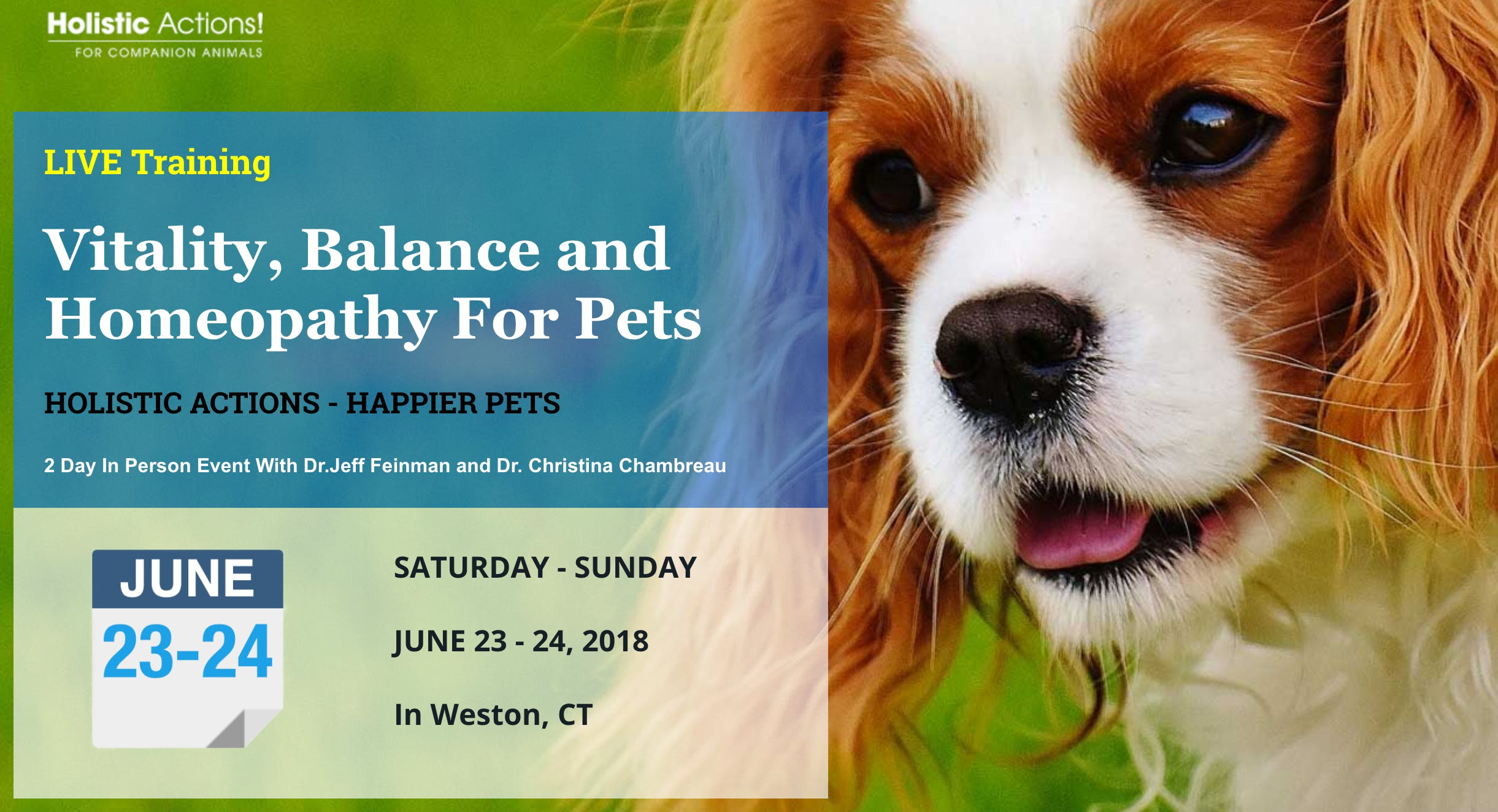Vitality, Balance and Homeopathy For Pets