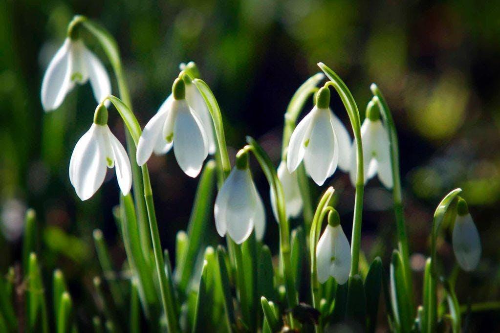 RETREAT 2019 Spring's sacred landscape: awakening our creativity for new beginnings