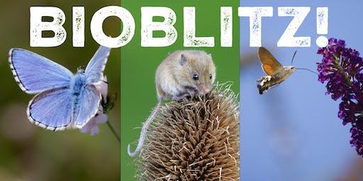 BioBlitz! at The Pines Calyx