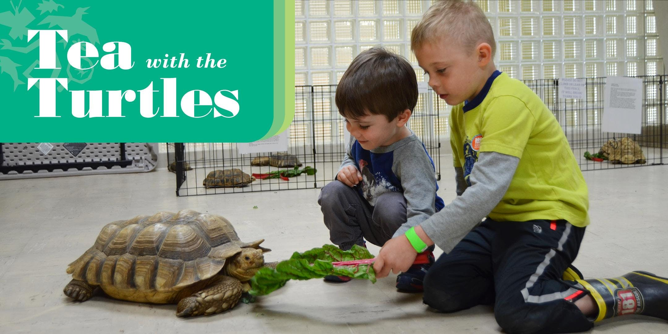 Tea with the Turtles