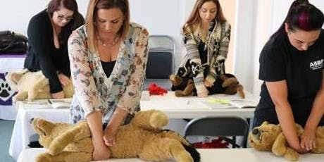 Pet cpr and first aid class for dogs, cats and puppies