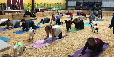 Goat Yoga at Lemos Farm