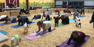 Goat Yoga at Lemos Farm