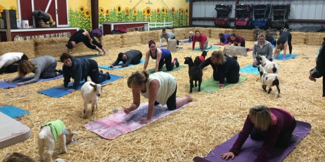 Goat Yoga at Lemos Farm entradas
