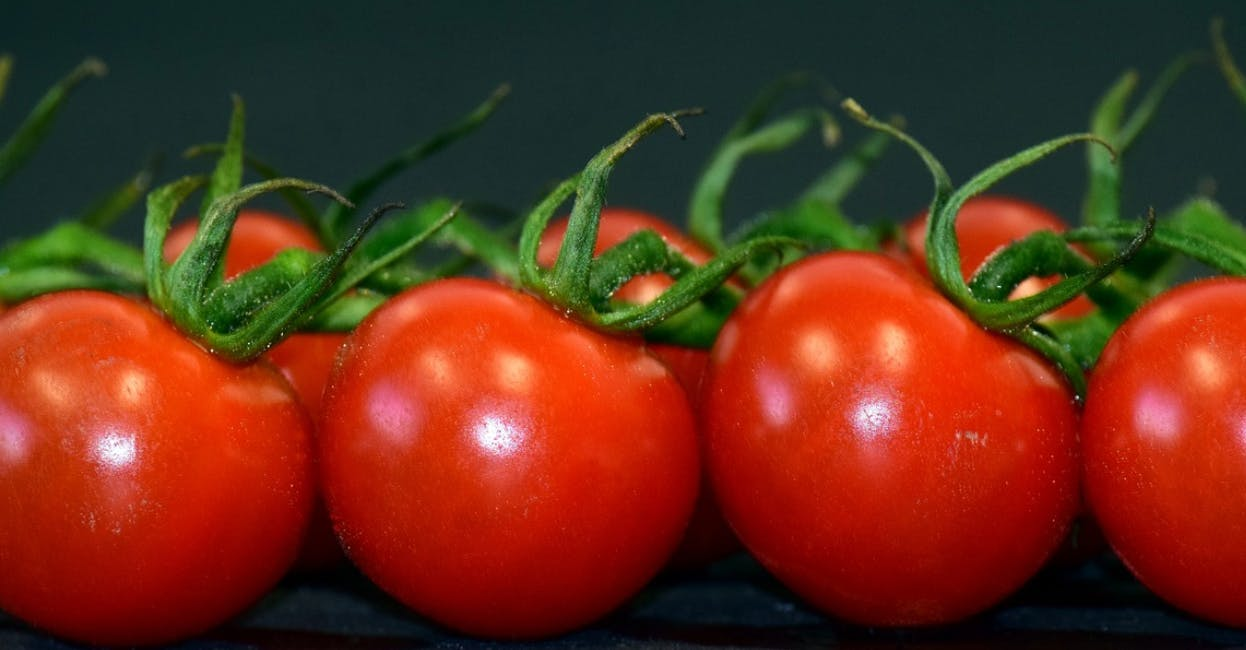 Tuesday May 22: Tomato Throw Show