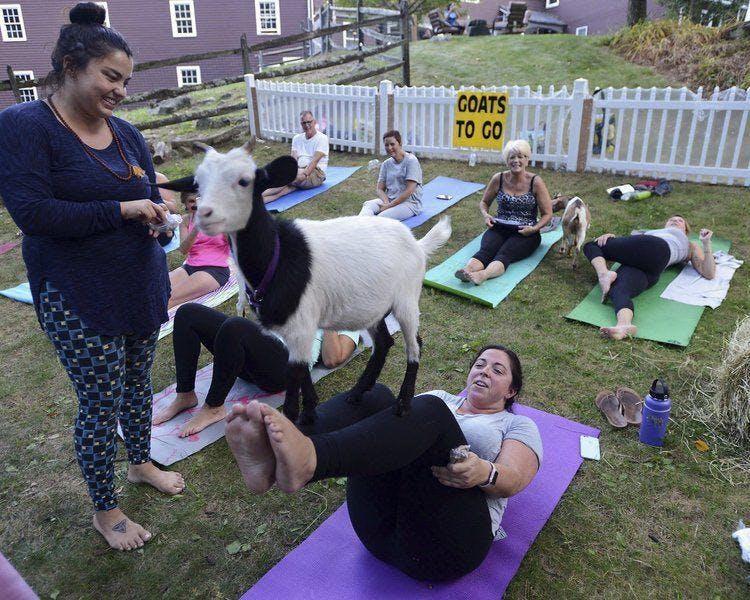 Goat Snuggle + Charity Night