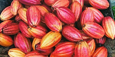 Cacao Farm Tour tickets
